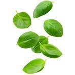 Fresh Cut Basil 30g